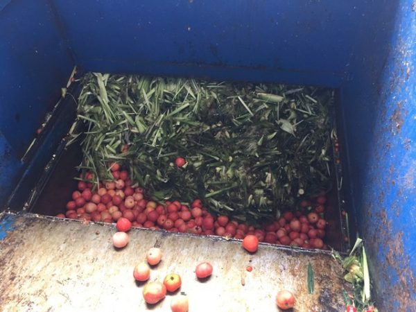 organic food waste being recycled